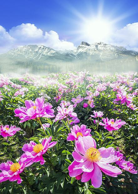 雪山下的花图片