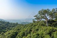 海南三亚热带雨林图片