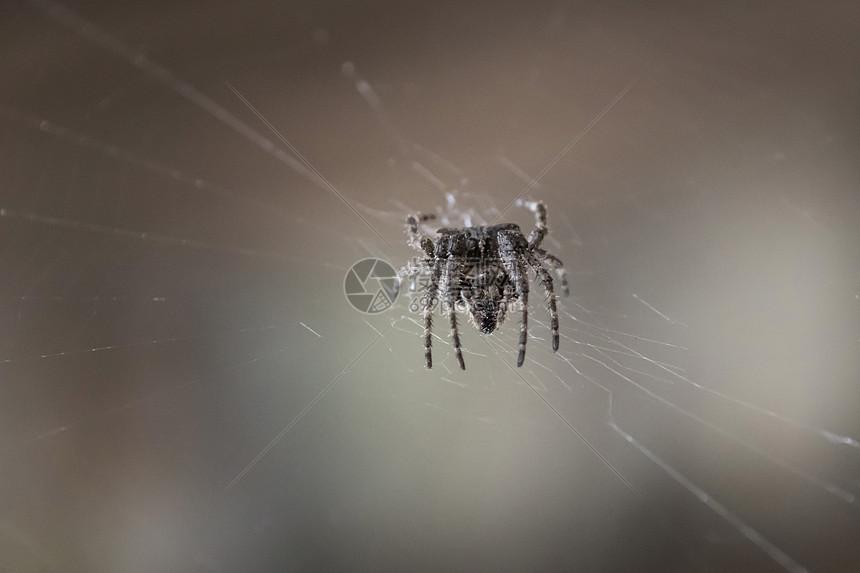织网狩猎的蜘蛛图片