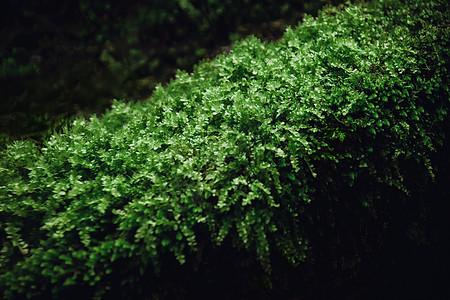 苔痕上阶绿 草色入帘青图片