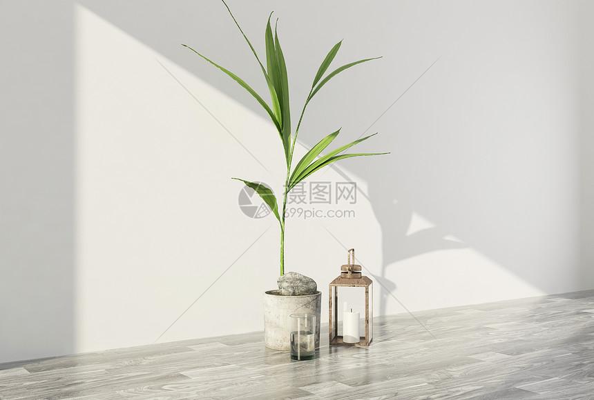 现代植物摆件图片