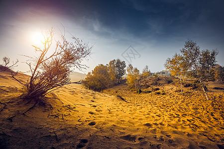 荒漠生命图片