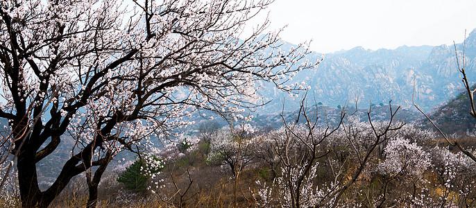 春季莲花山图片