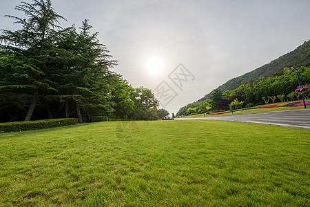 夏日阳光下的绿草地图片