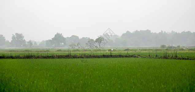 梅雨时节朦胧田园图片