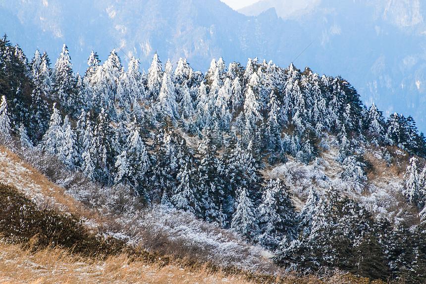 冰雪覆盖的森林图片