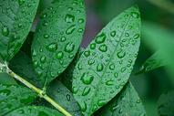 绿叶水珠图片