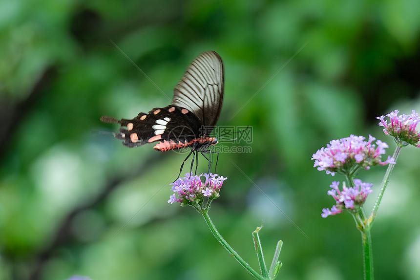 花丛上的蝴蝶图片