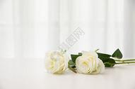 桌子上的白玫瑰图片