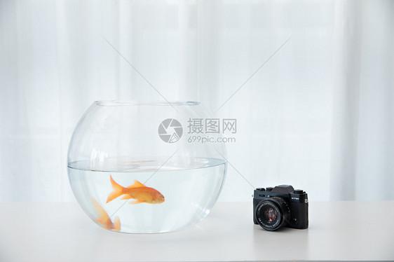 桌上的金鱼和相机图片