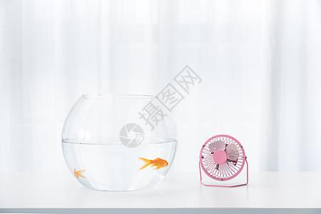 金鱼和小风扇图片