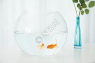 桌子上的小金鱼图片
