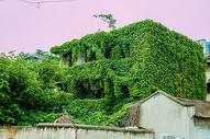 爬山虎的房子图片