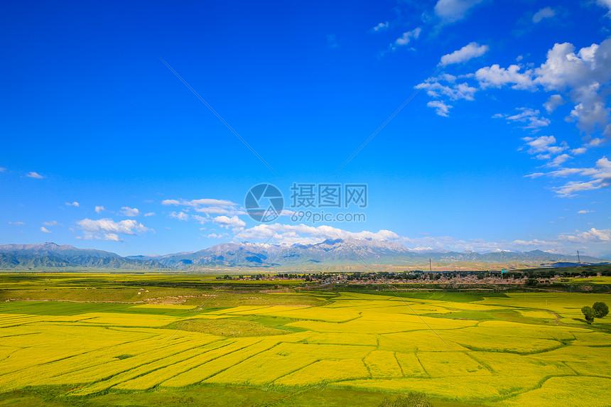 甘肃张掖夏季油菜花图片
