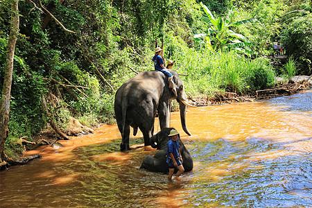 泰国清迈丛林骑大象图片