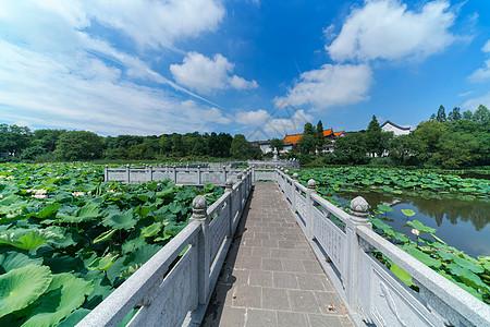 晴空万里的武汉东湖磨山荷花池图片
