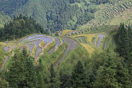 贵州加榜梯田图片