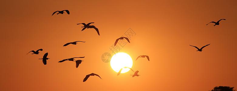 白鹭朝阳图片