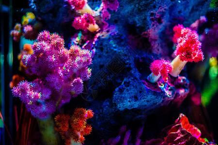 曼谷海底世界珊瑚图片
