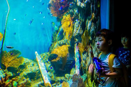 观看曼谷海底世界图片