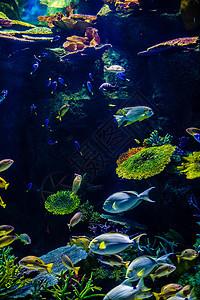 曼谷海底世界图片