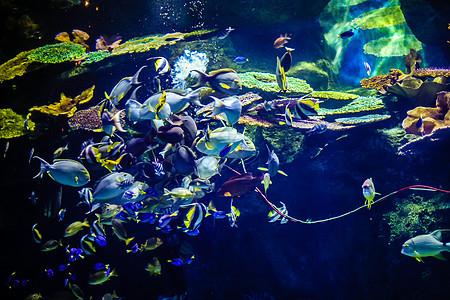 鱼海底世界图片