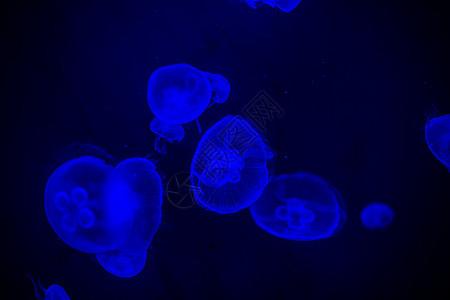 海底世界水母图片