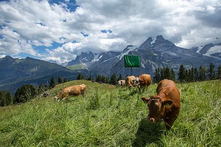 纯净自然的瑞士阿尔卑斯山区风光图片