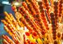 南京夫子庙冰糖葫芦图片