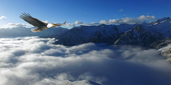 雄鹰背景图片