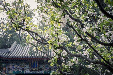 北京颐和园风光图片