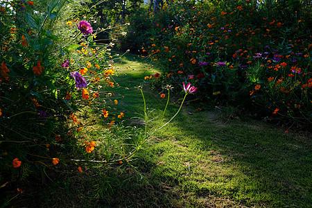 花丛深处图片