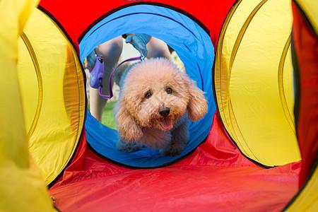 开心玩耍的狗狗图片