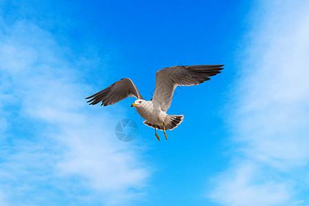 青海湖 鸟岛图片