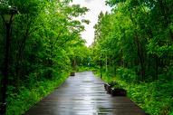 吉林长白山二道白河小镇东北亚植物园图片