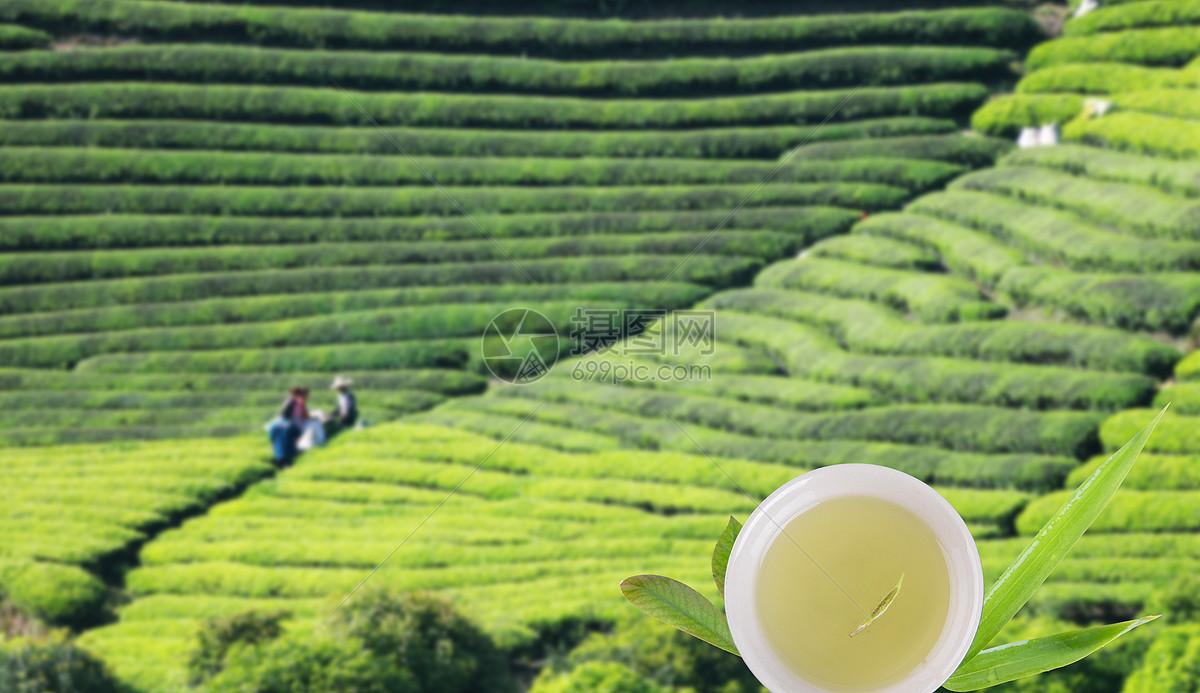 安吉白茶有什么特点