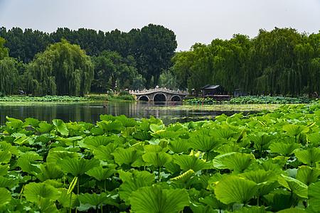 颐和园荷花与风景图片