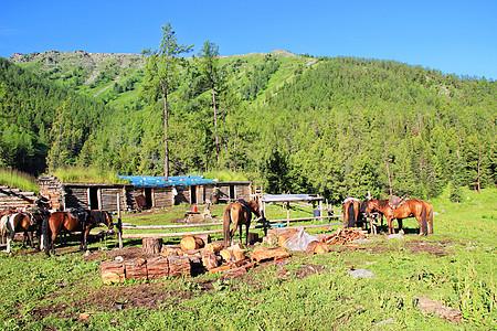 新疆喀纳斯牧场图片