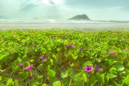 广东惠东盐洲岛海岸沙滩花海图片