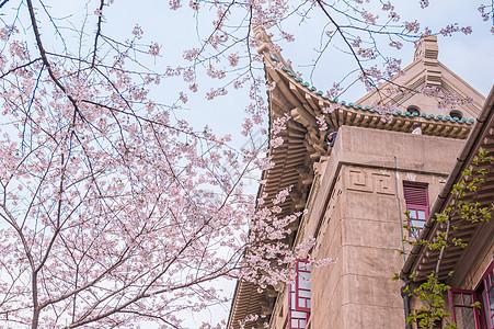 武汉大学樱花图片