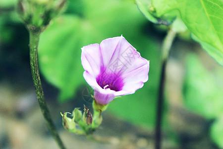 夏天花朵图片