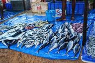 斯里兰卡海鲜市场图片