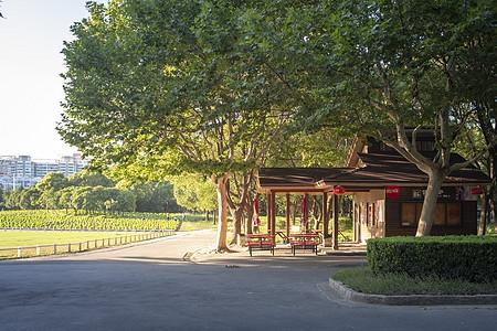 上海世纪公园风光图片