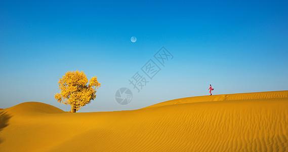 沙漠里的胡杨图片