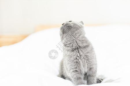 仰头的小蓝猫图片