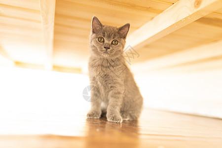 床下的小猫图片