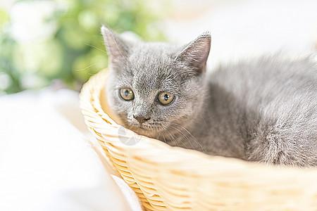 篮子里的小猫图片