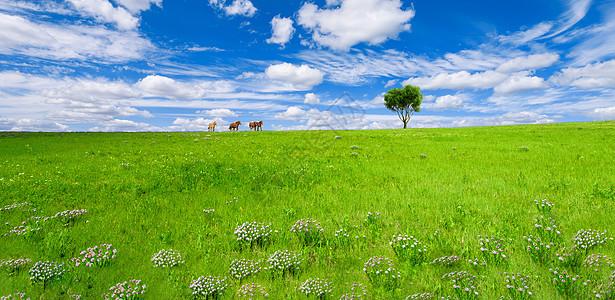 草原上奔驰的马匹图片