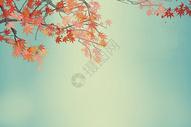 枫叶背景图图片