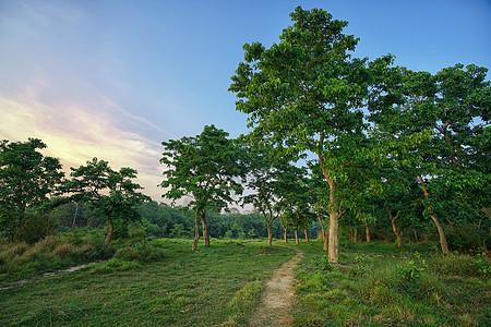 尼泊尔奇特旺国家公园热带雨林风光图片